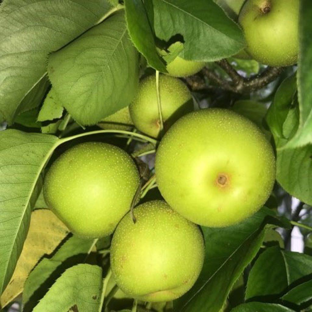 produce-10
